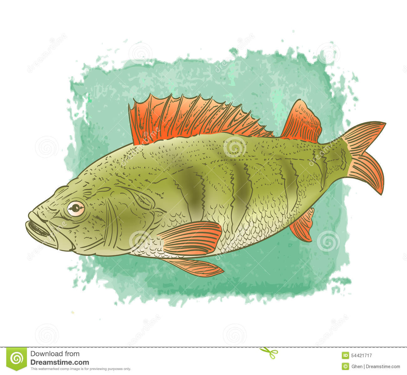 Freshwater Fish Color Drawing Stock Vector - Illustration of ...
