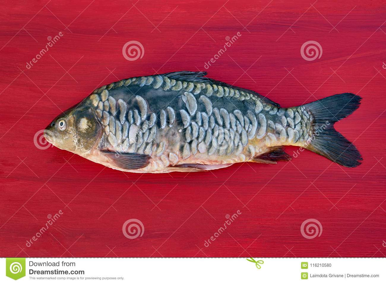 Freshwater Fish. Mirror Carp On Red Wooden Background. Copy Spac ...