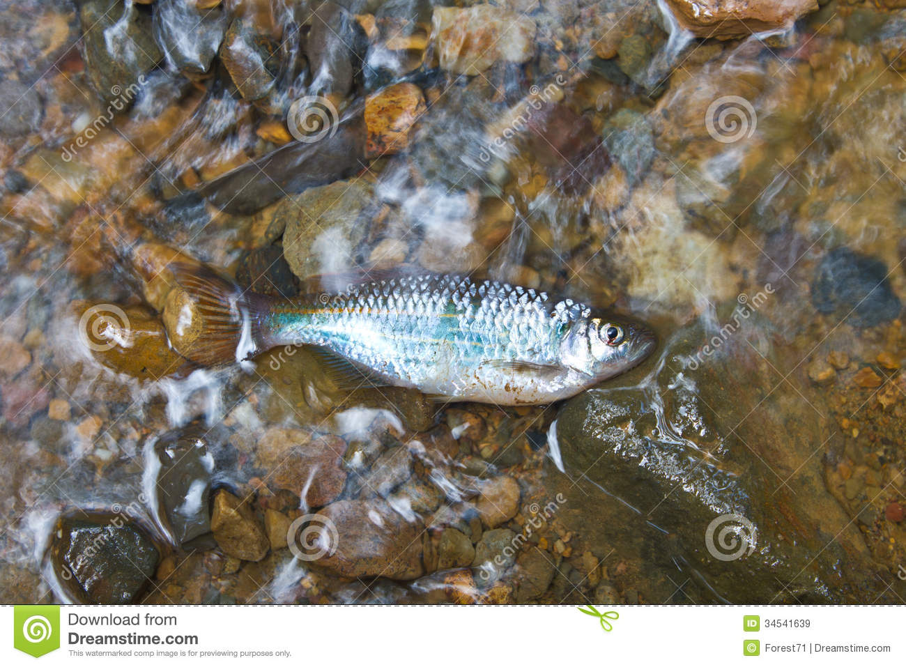Freshwater fish on stream are dry stock image image for Fish and stream