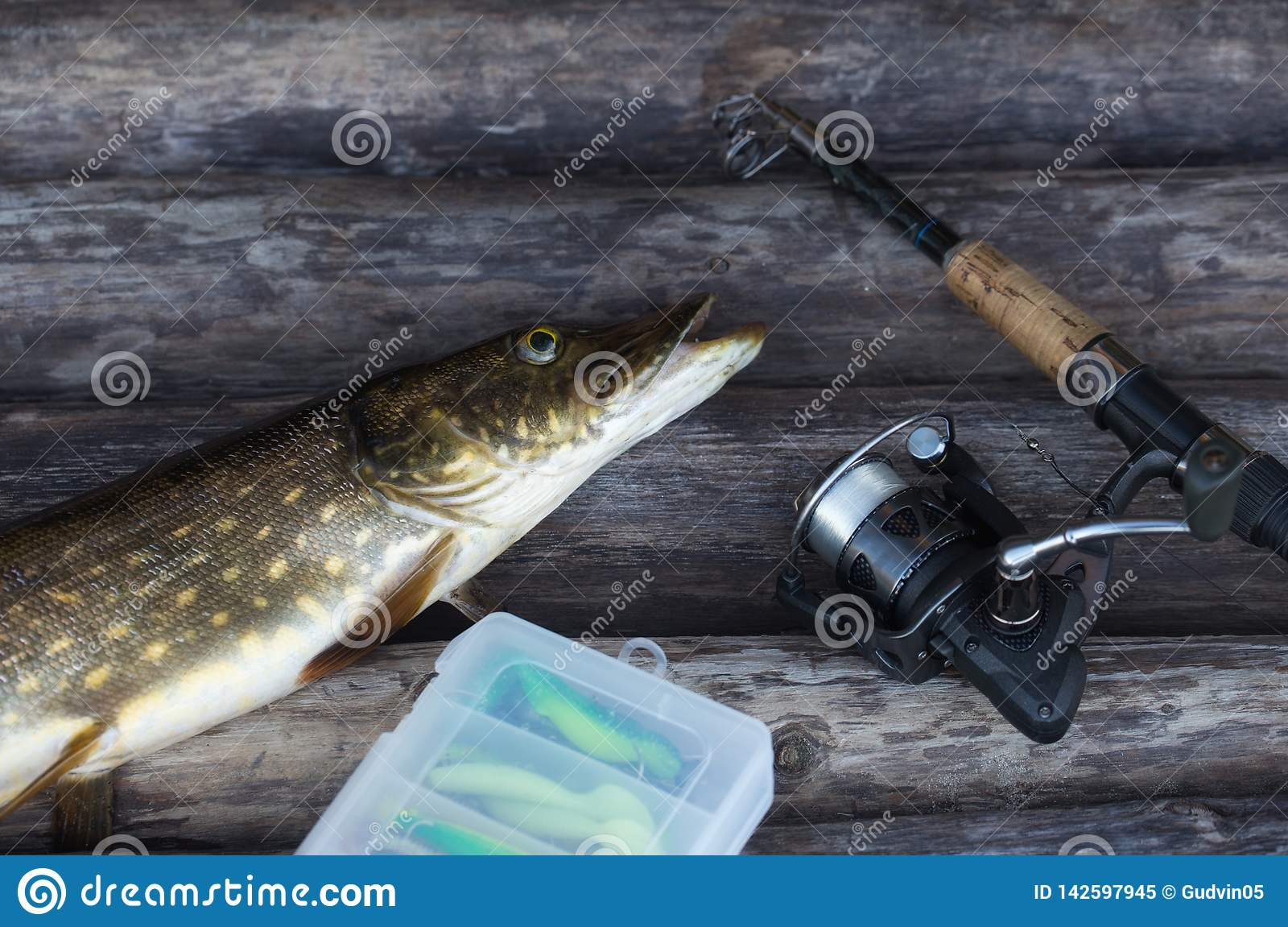 Freshwater Northern pike fish and fishing rod with reel lying on vintage wooden background