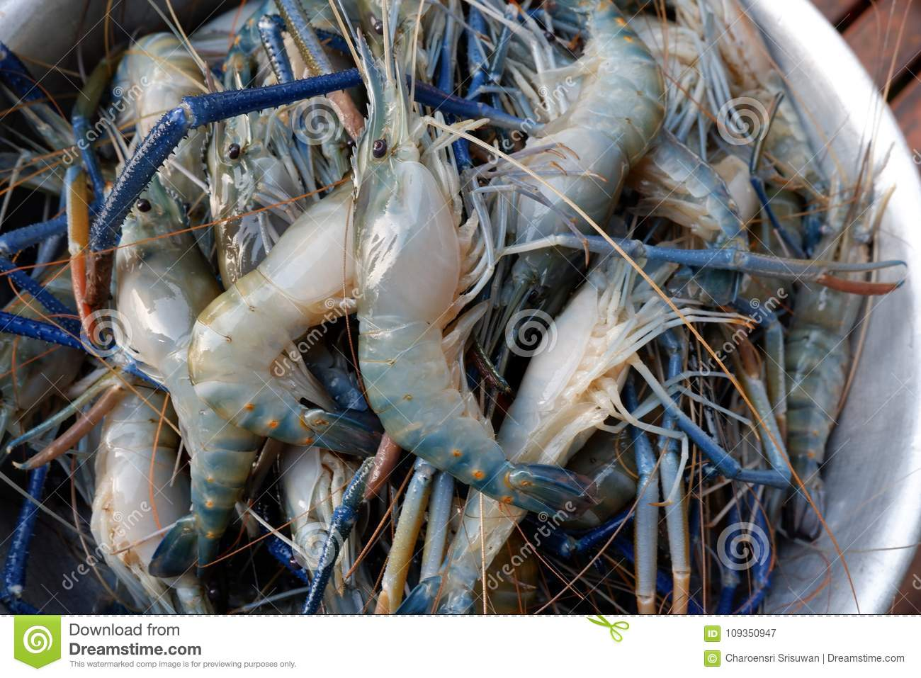 Freshwater Prawn, Giant River Prawns Stock Image - Image of