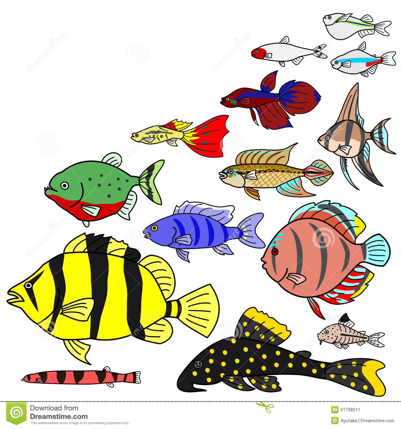 Freshwater fish kingdom - Freshwater Tropical Fish Species Stock Image