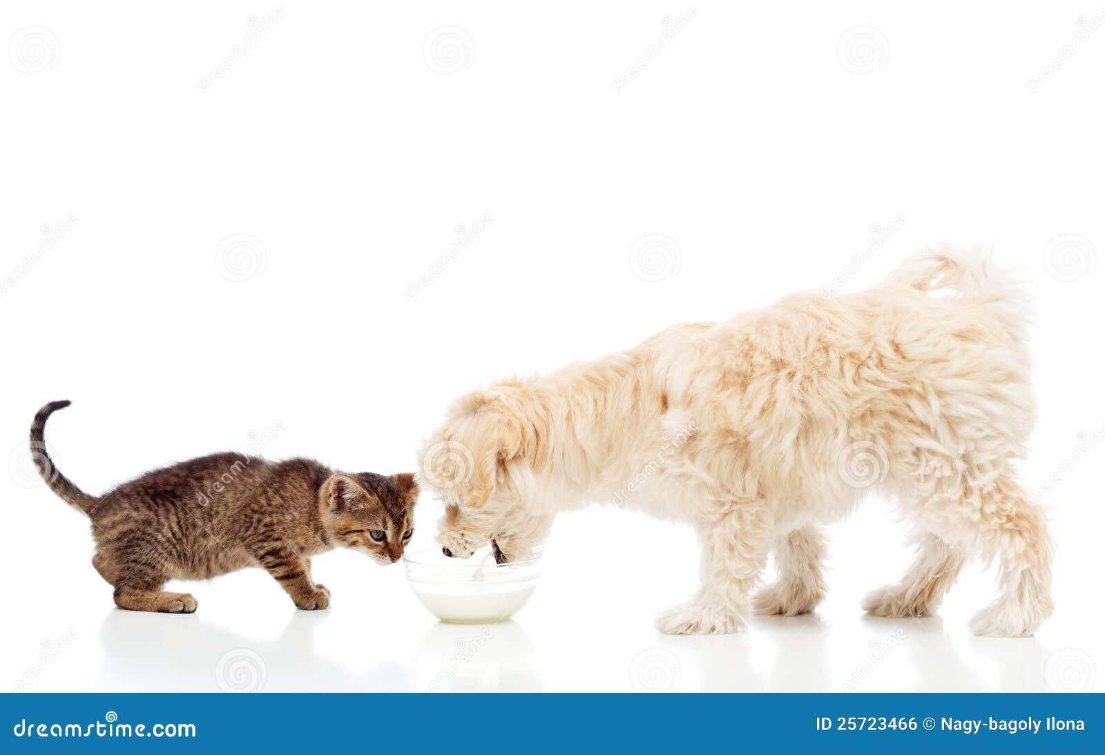 Freunde an der speisenschüssel - Hunde- und Katzeessen