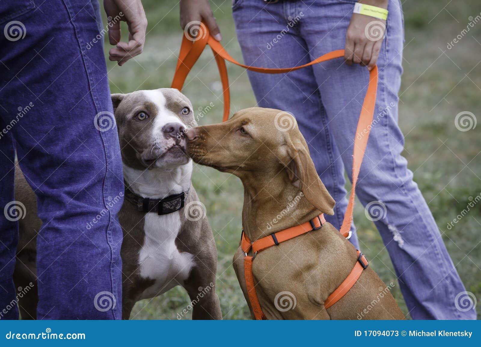 Freundliche Hunde