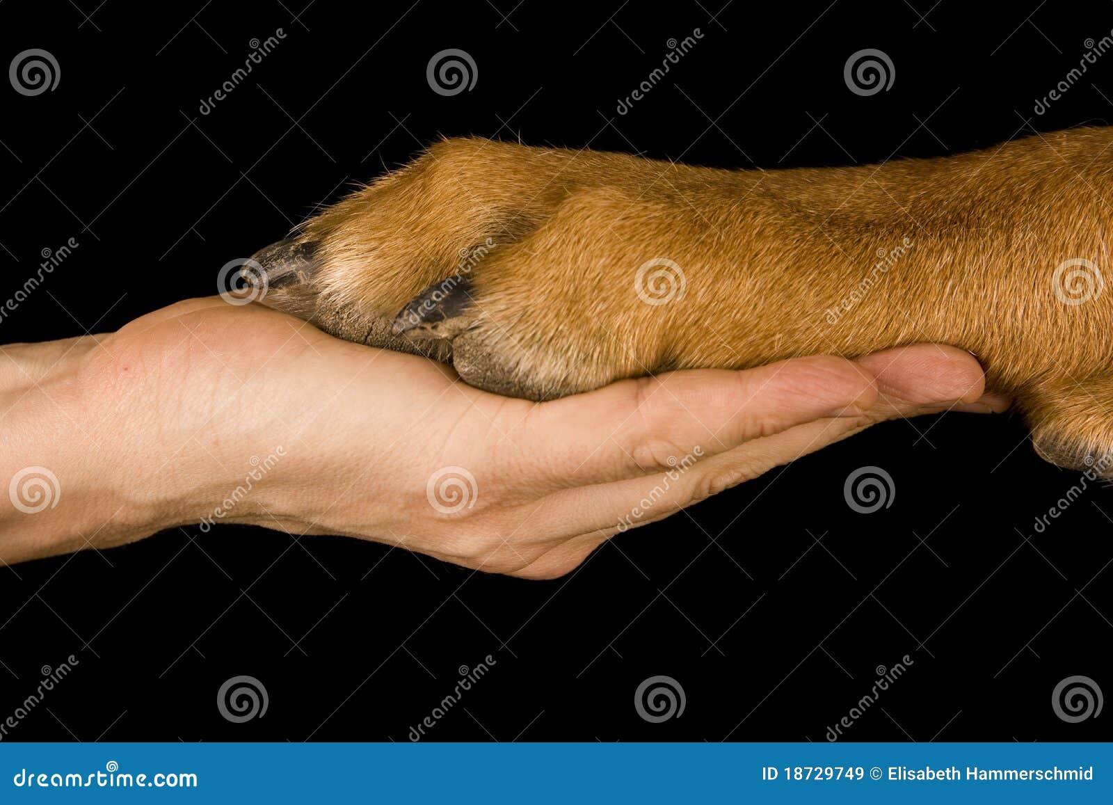 Freundschaft-Mensch gegen Hund