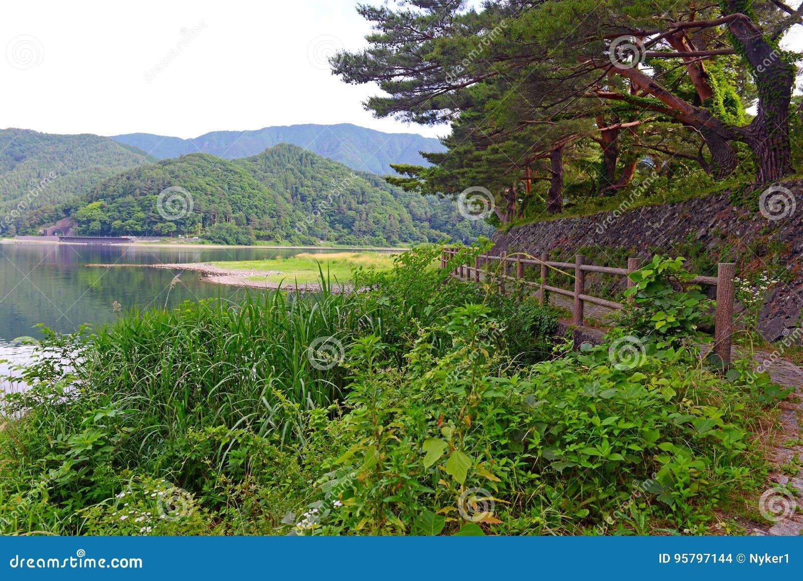 Fridsam naturplats med gröna berg, träd och sjön i Kawaguchiko nära Mount Fuji