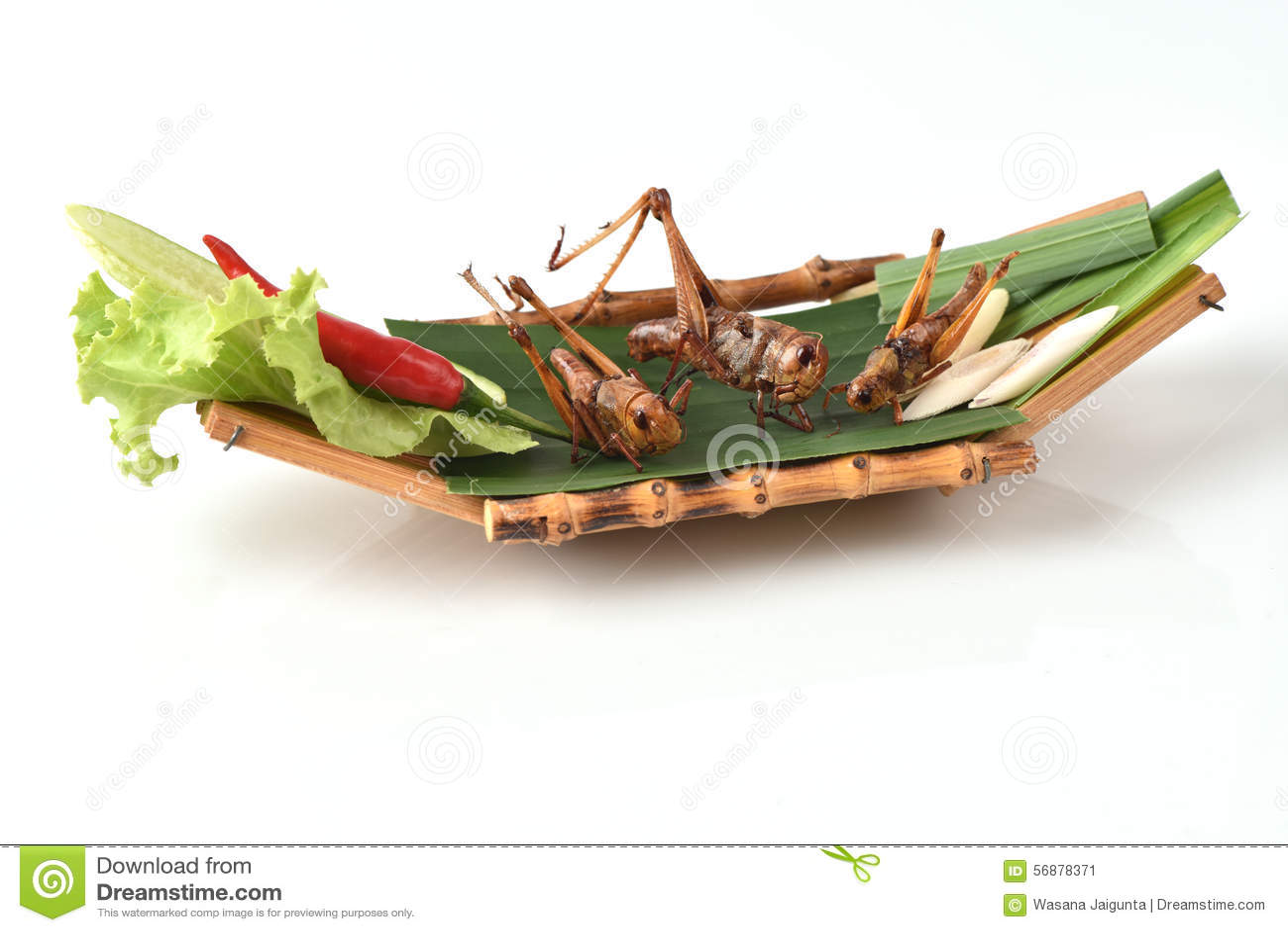 Fried Bombay Locust (succincta Linn di Patanga )