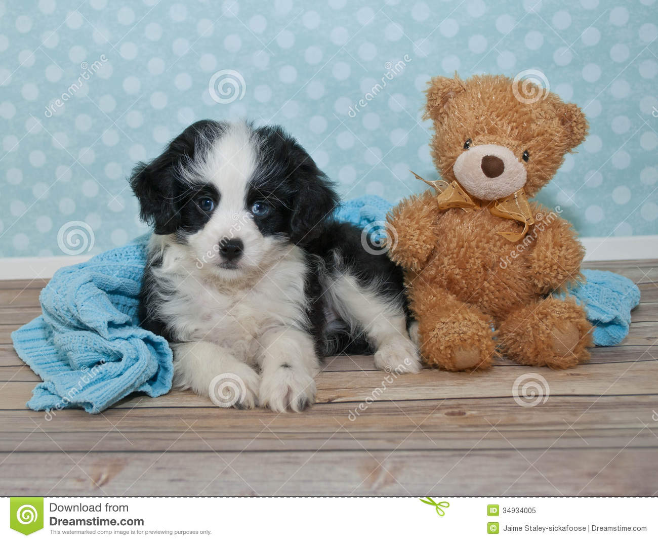 friends stock image image of photography  pretty  card Teacup Puppies Teddy Bear Teddy Bear Puppies Shih Tzu