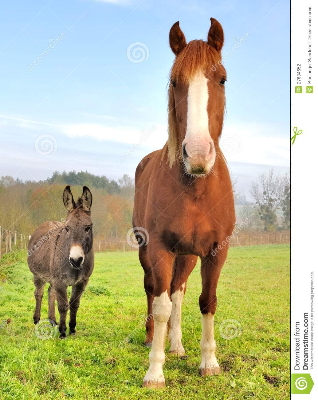 Friendship Between A Donkey And A Horse Stock Photo