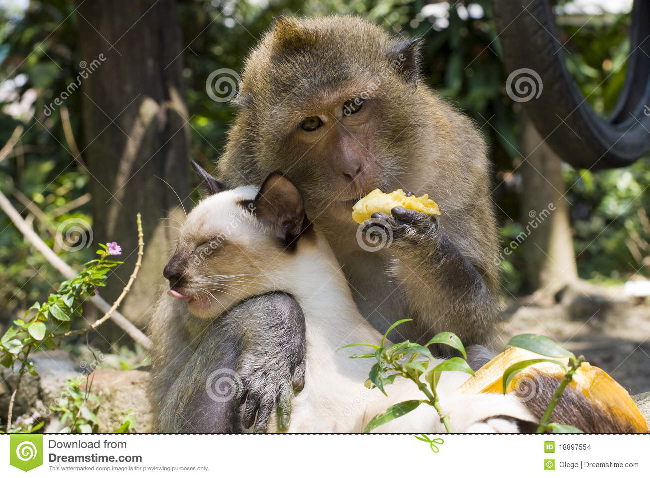 friendship between the monkey and cat stock photo