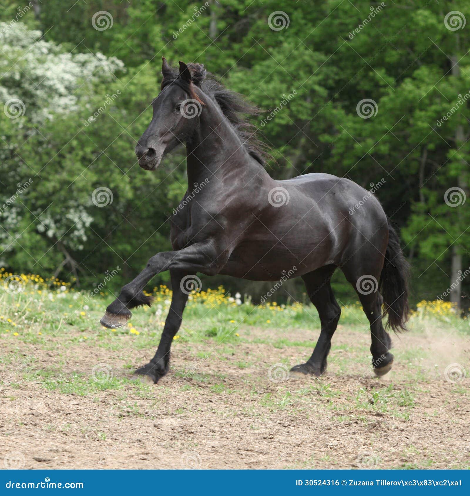 Black Horse Wallpapers - Wallpaper Cave  |Friesian Horses Running