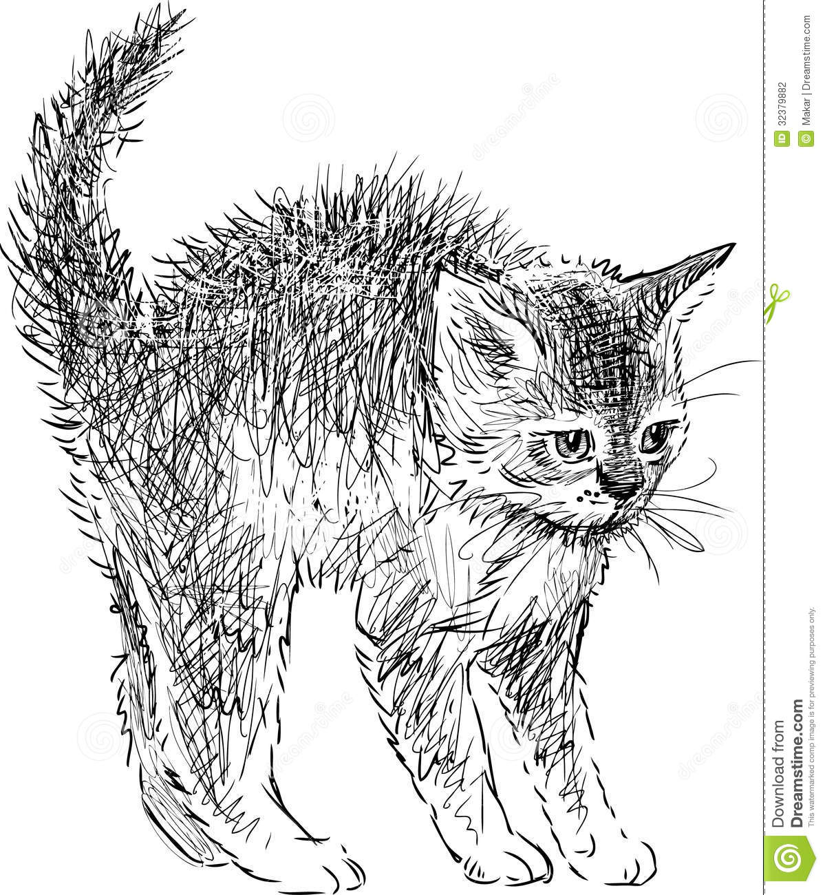 Frightened Kitten Stock Photo Image Of Ears Drawn Tail
