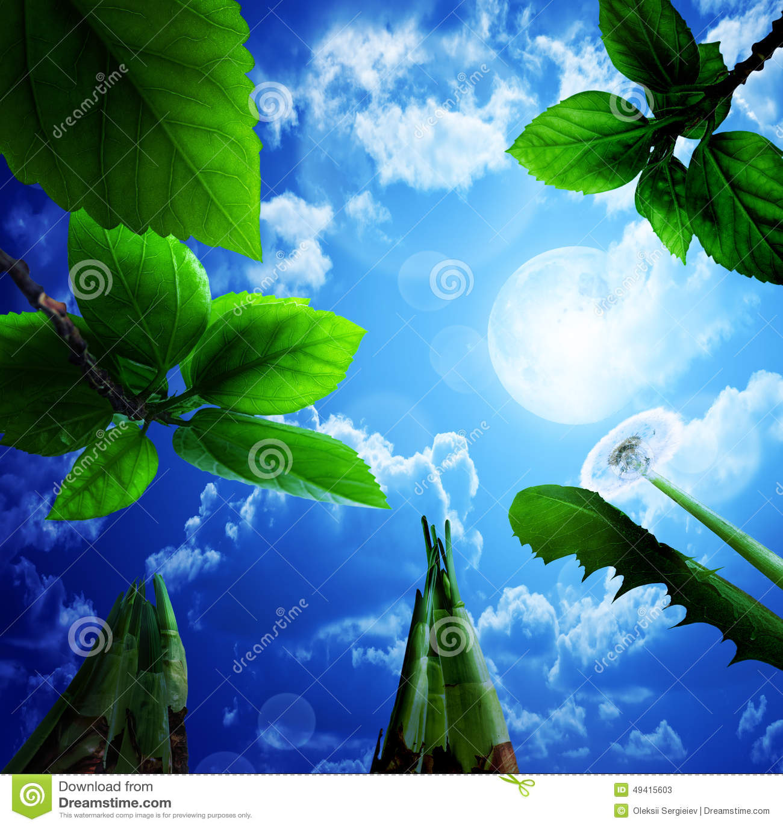 Download Frische Blätter, Hintergrund Stockbild - Bild von tropfen, nahaufnahme: 49415603