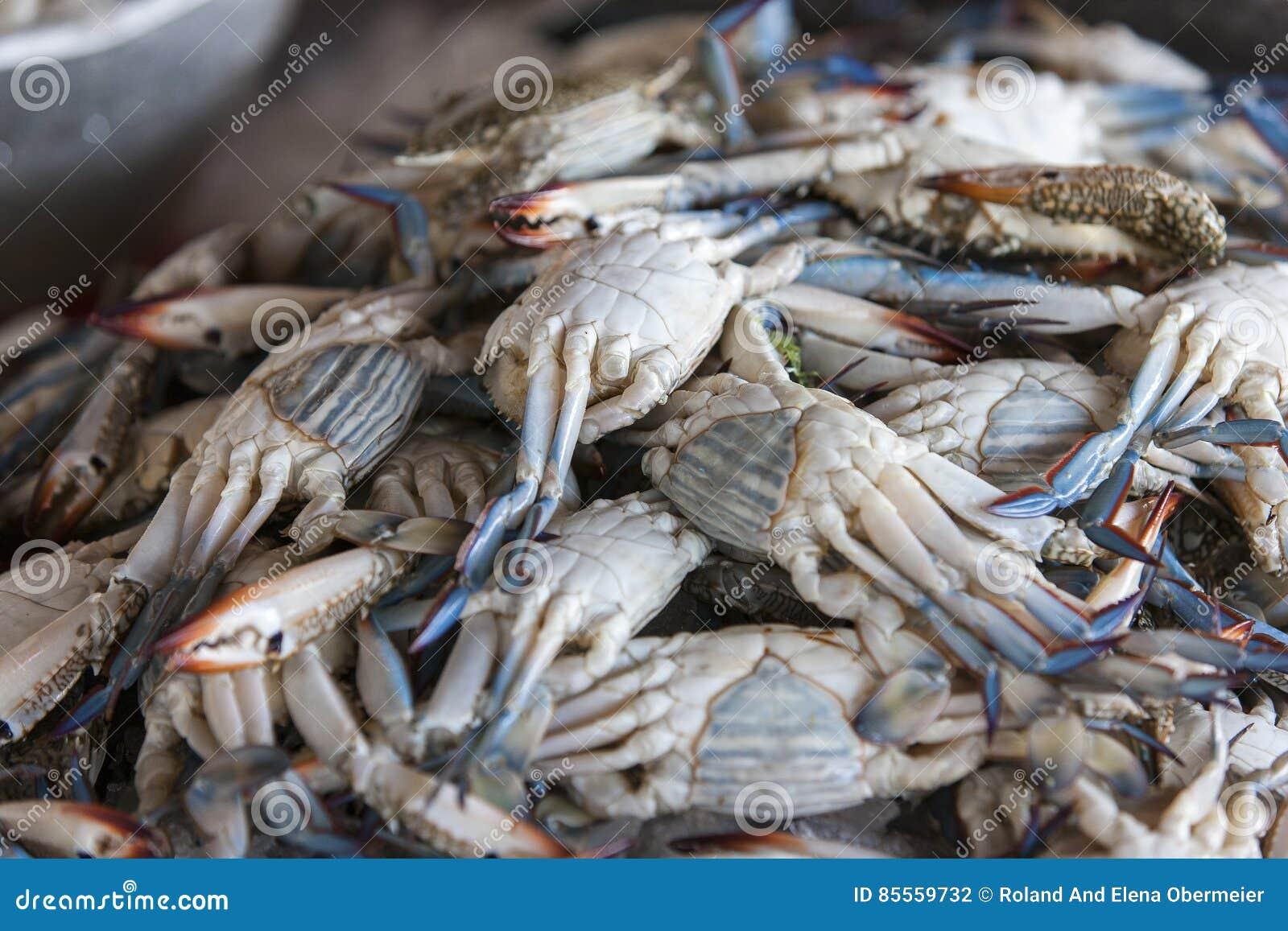 Frische blaue Krabben auf der Fischmarktanzeige