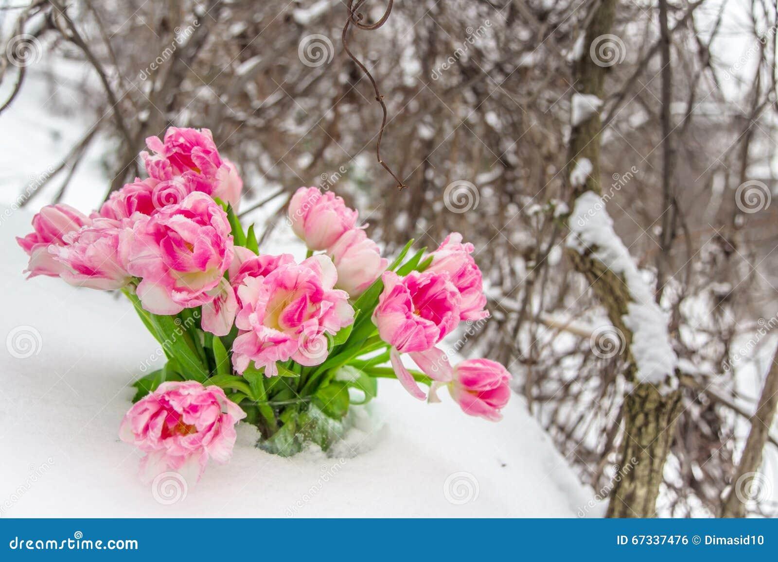 Blumen Im Schnee Fotos Bilder Schnee Blumen K Suche Stockfotos