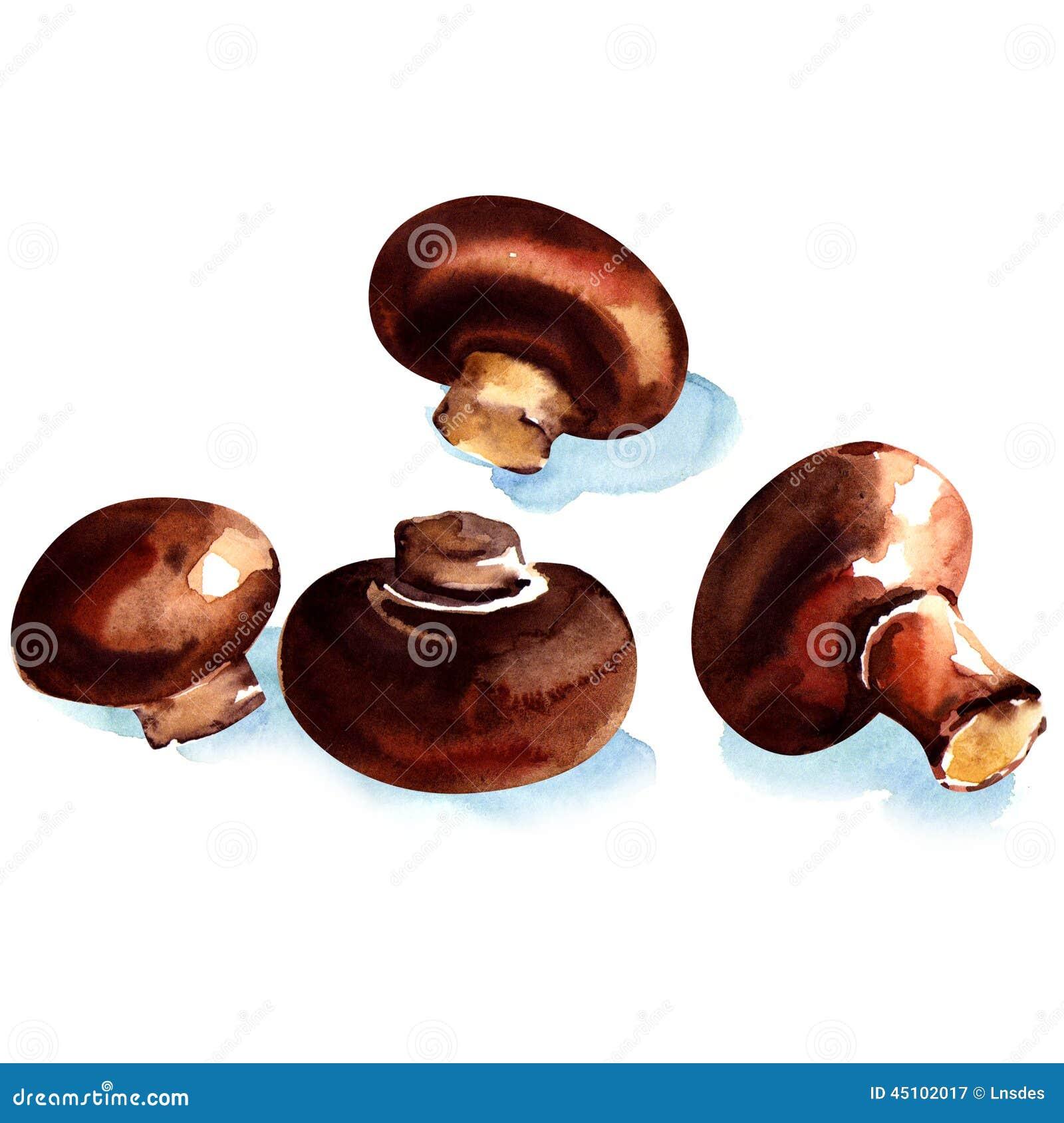 frische champignons browns lokalisiert stock abbildung. Black Bedroom Furniture Sets. Home Design Ideas