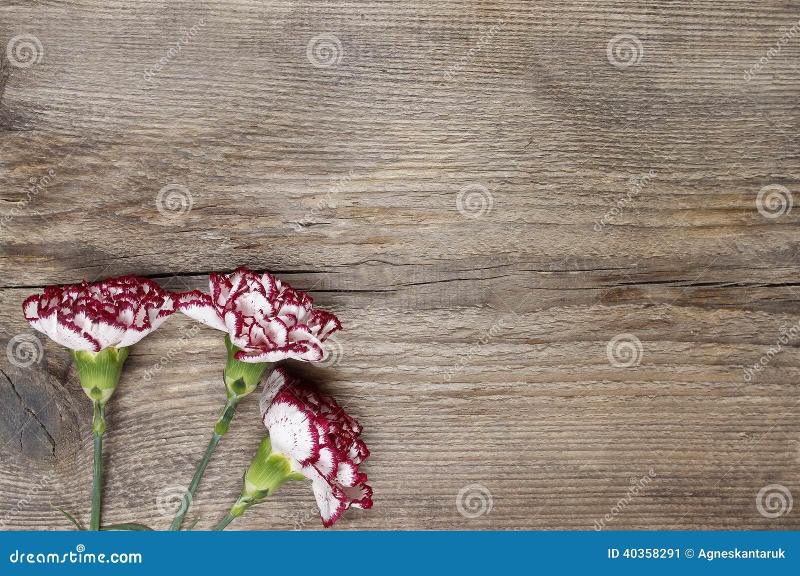 Frische Gartennelkenblumen auf hölzernem Hintergrund