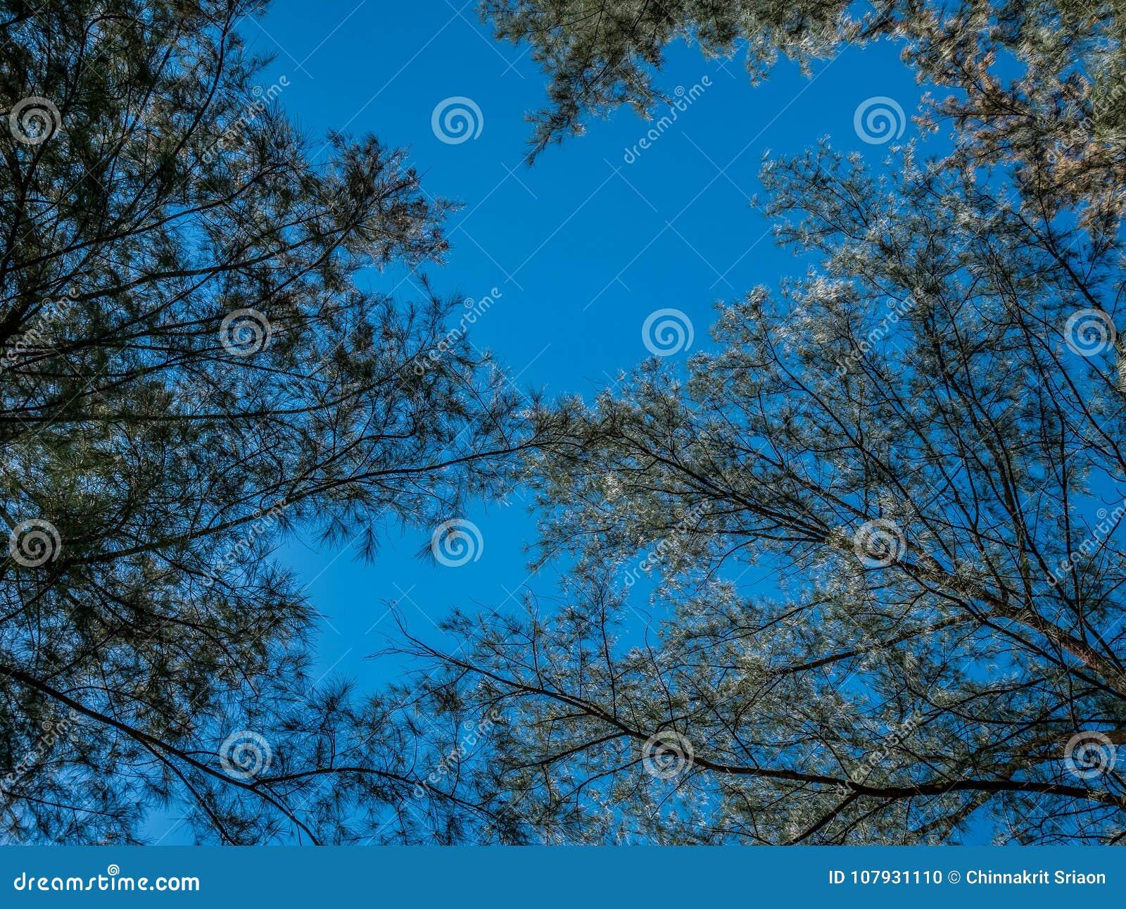 Frische grüne Bäume und weiße flaumige Wolken im blauer Himmel daylig