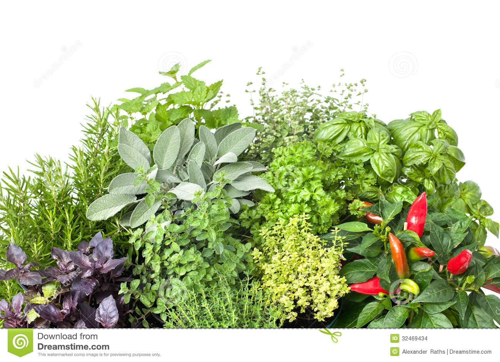 Different herbs royalty free stock image image 16265346 - Frische K Chenkr Uter Stockbilder
