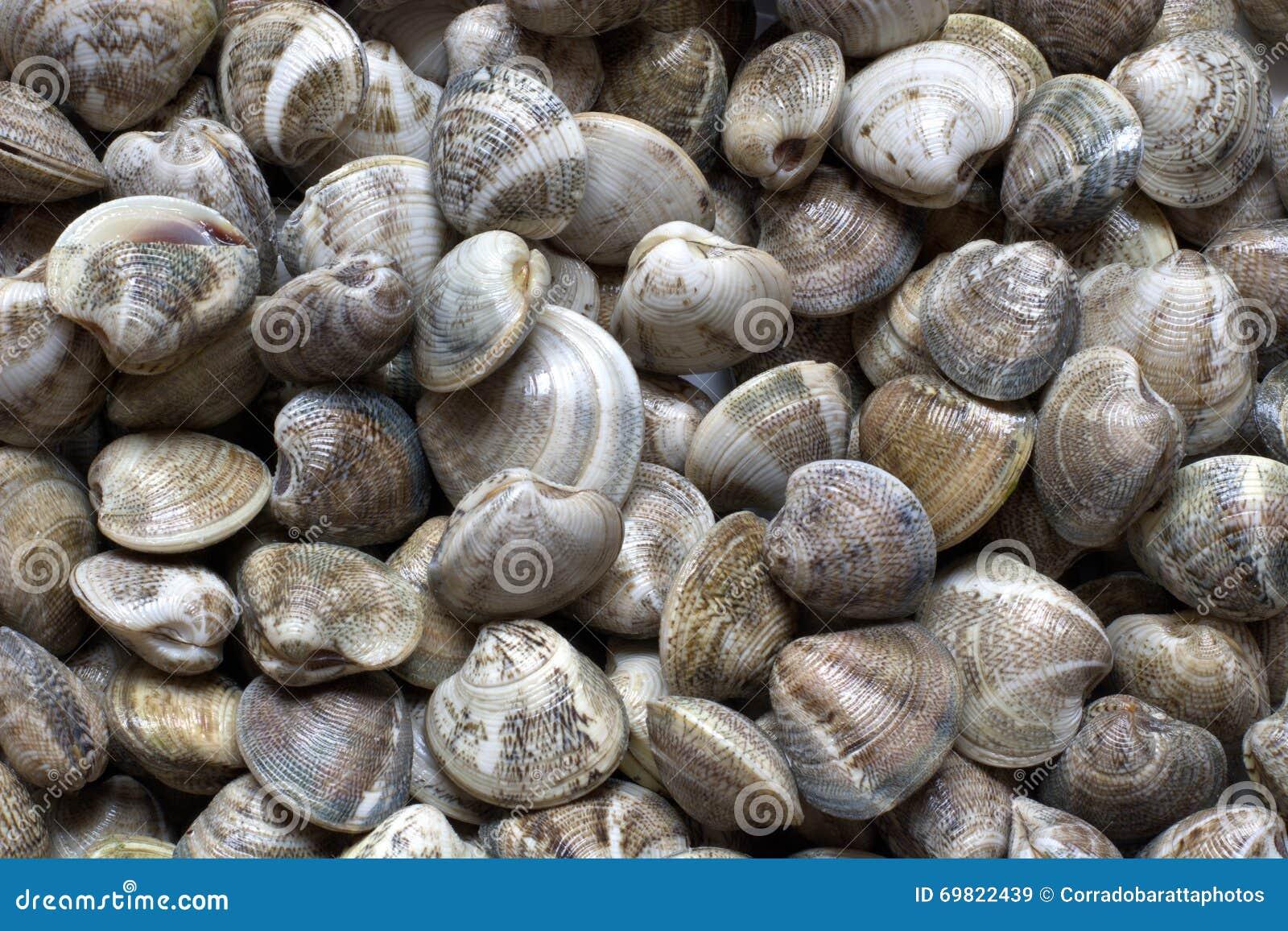 Frische Muscheln Von Adria Stockfoto  Bild 69822439
