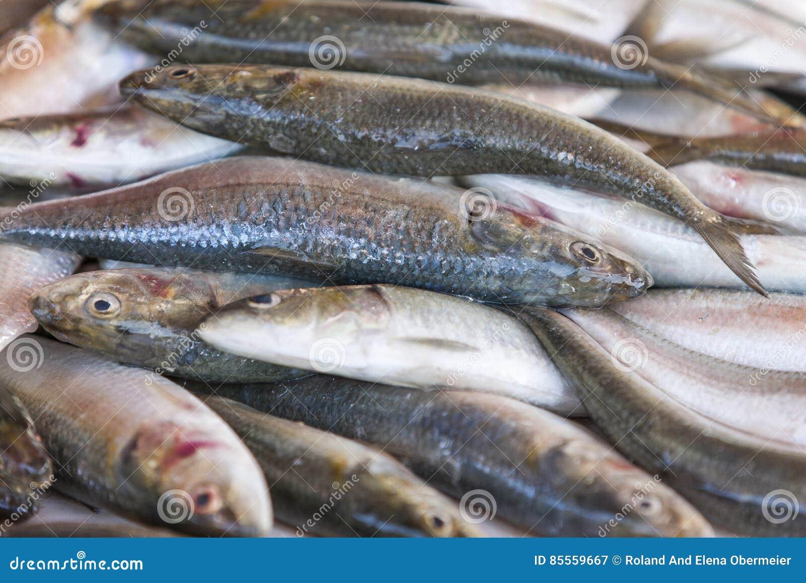 Frische Sardinen angezeigt auf dem Fischmarkt