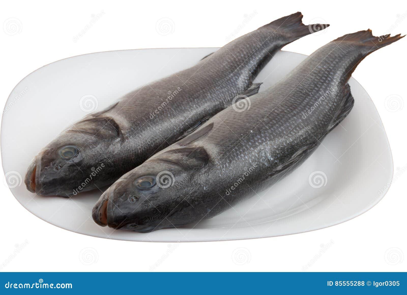 Frische Seebarschfische