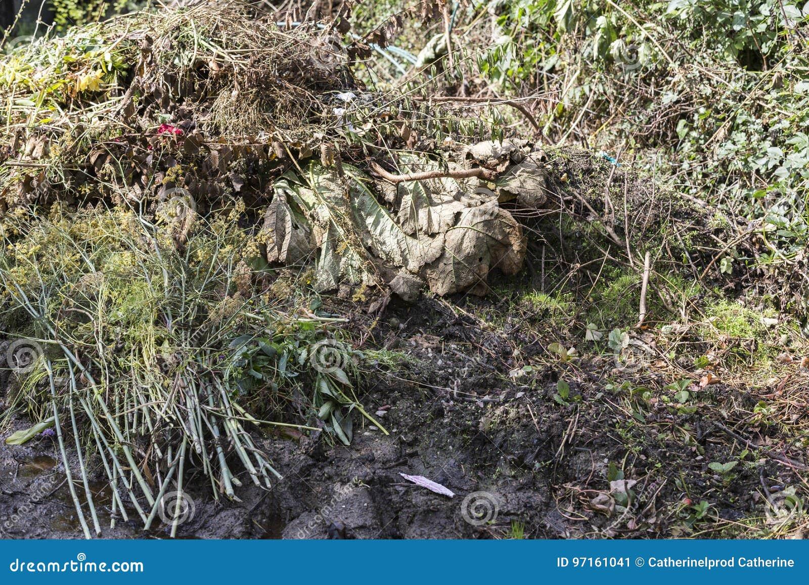Frischer Bio Abfall Und Kompost Im Garten Stockbild Bild Von Apfel