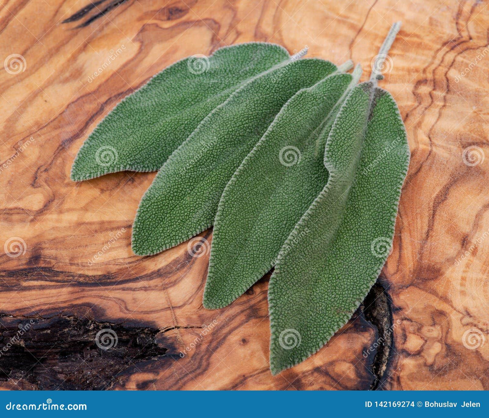 Frischer Biogarten oder allgemeine Sage Salvia-officinalis Bl?tter auf Naturholz Lamiaceaelippenbl?tler