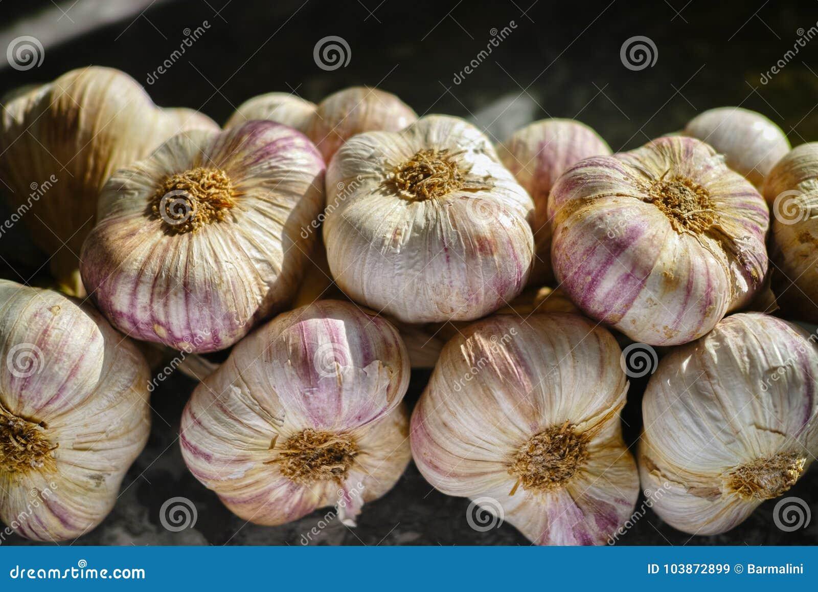 Frischer französischer violetter und rosafarbener Knoblauch von Provence, Frankreich