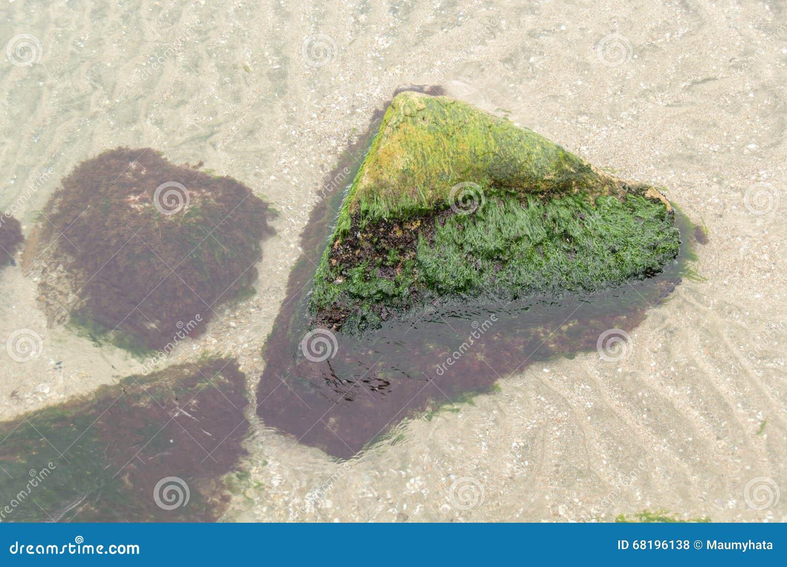 Frischer grüner Ozean