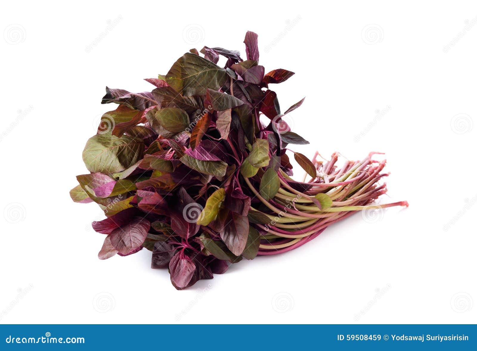 Frischer roter Spinat oder roter Amarant auf Weiß