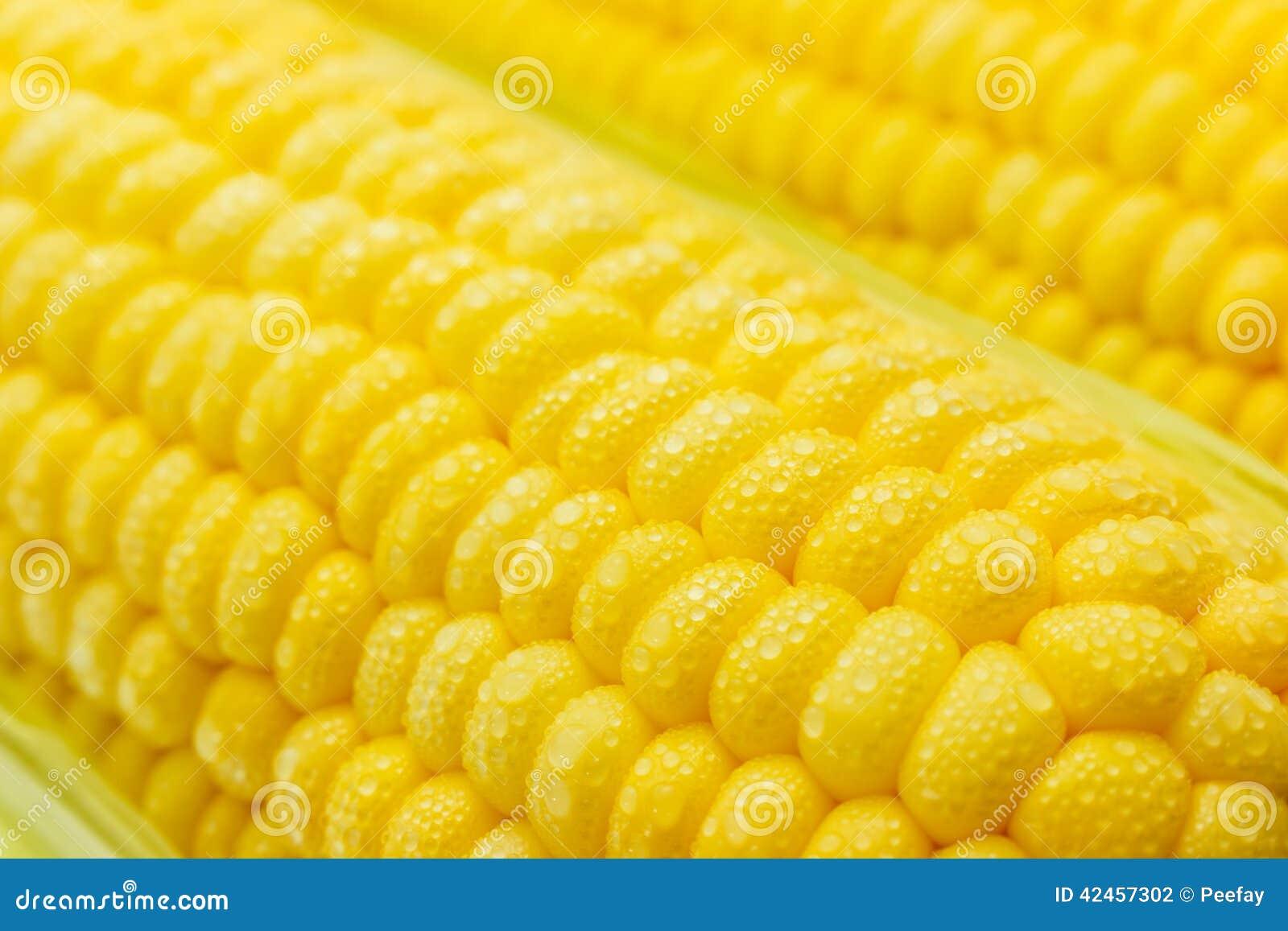 Frischer süßer Mais