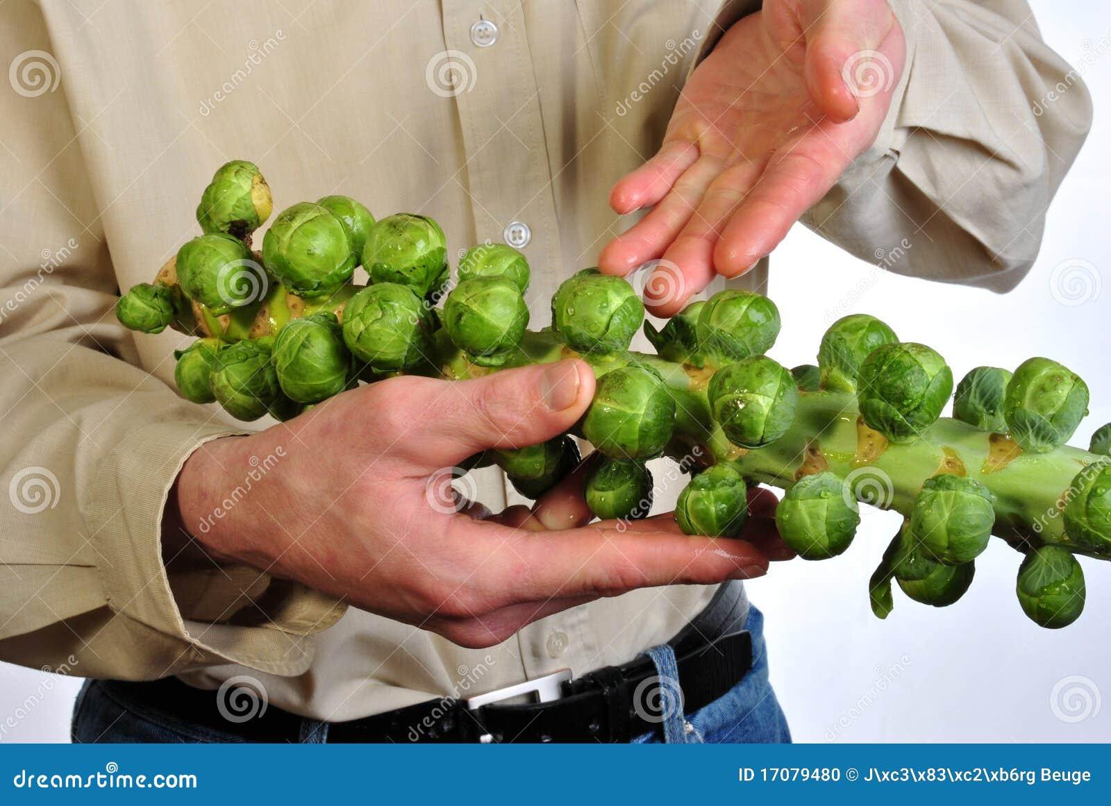 Frischer und gesunder organischer Rosenkohl