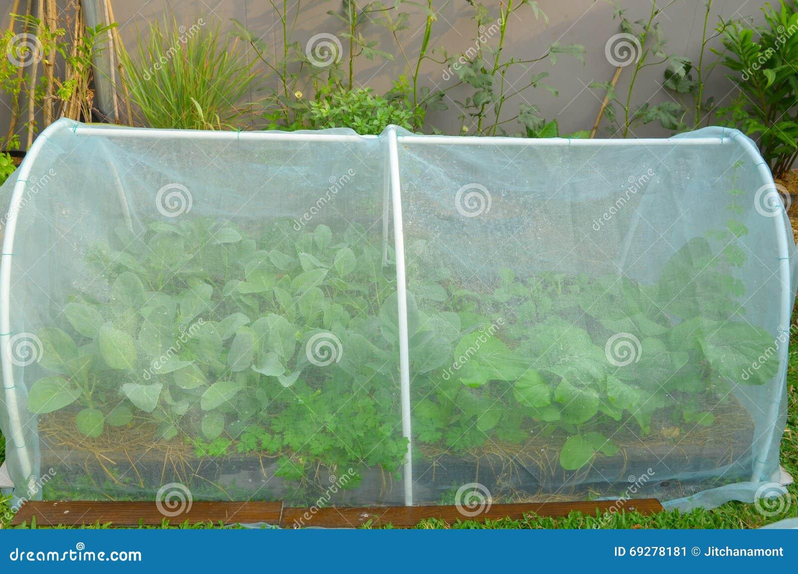Frischgemuse Im Hochbeetgarten Mit Netz Im Hausgarten Stockbild