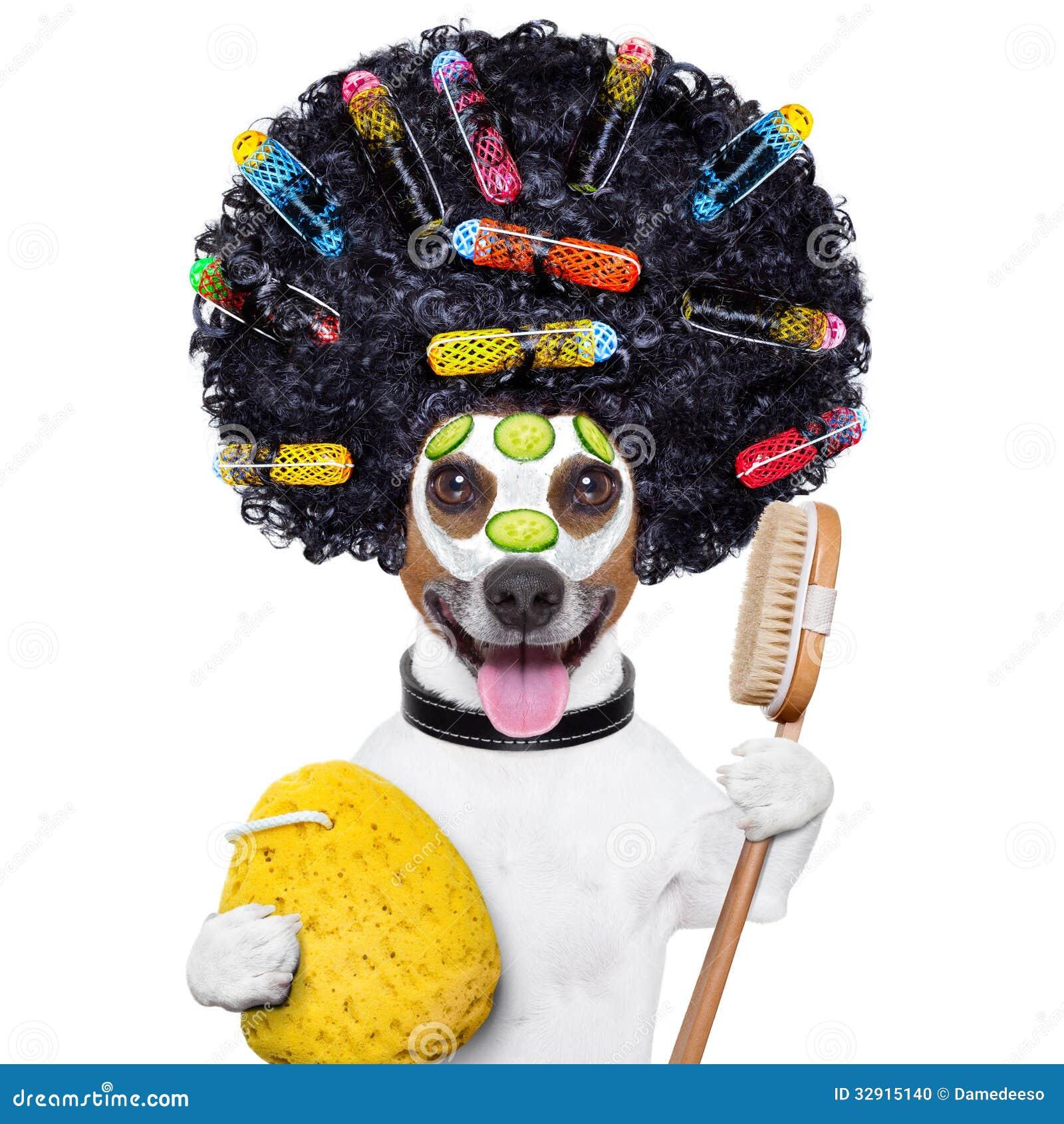 Dog Grooming No Backgroiund