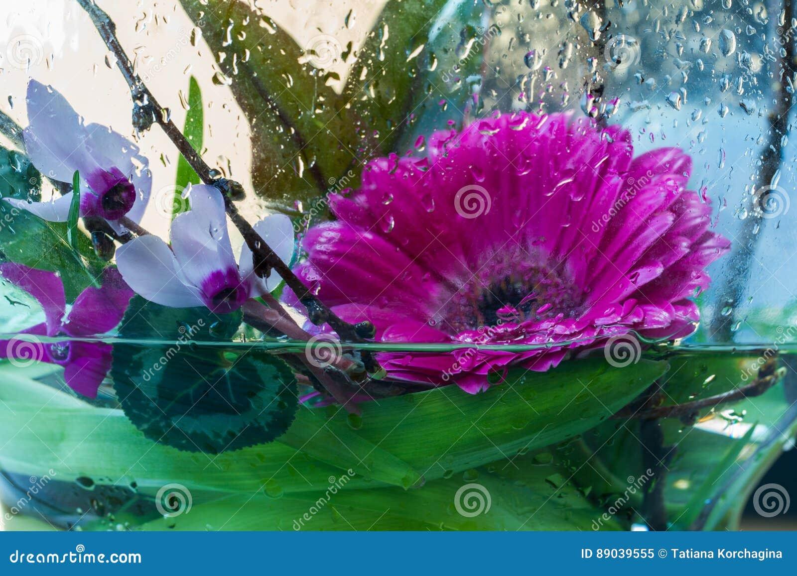 Friskhet blommor i vattendropparna