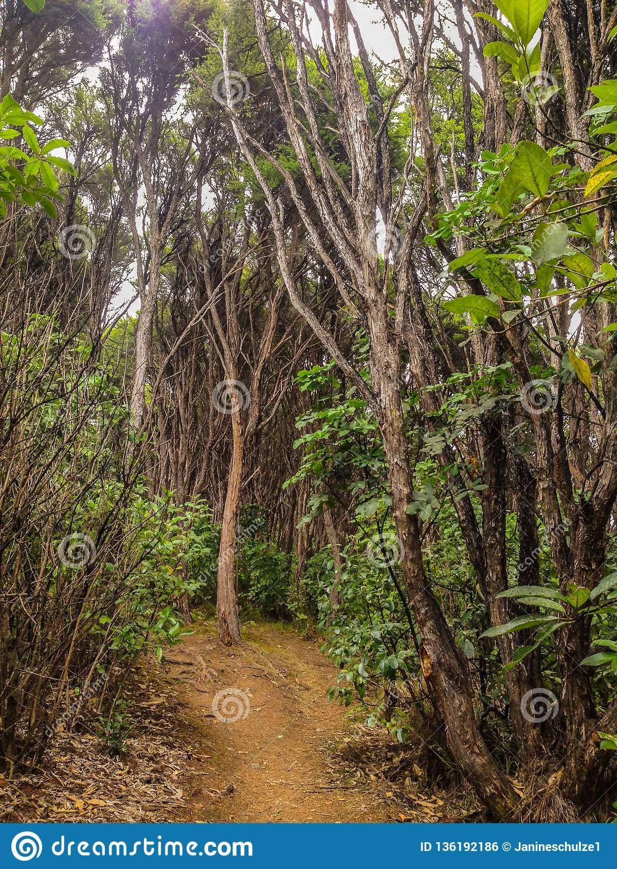 Frodig rainforest nära Picton, södra ö, Nya Zeeland