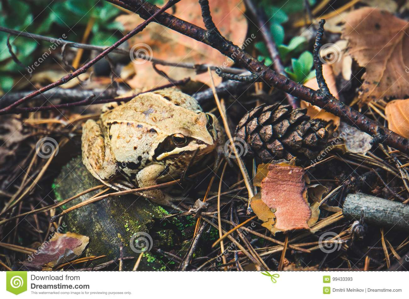 Frog in autumn forest.