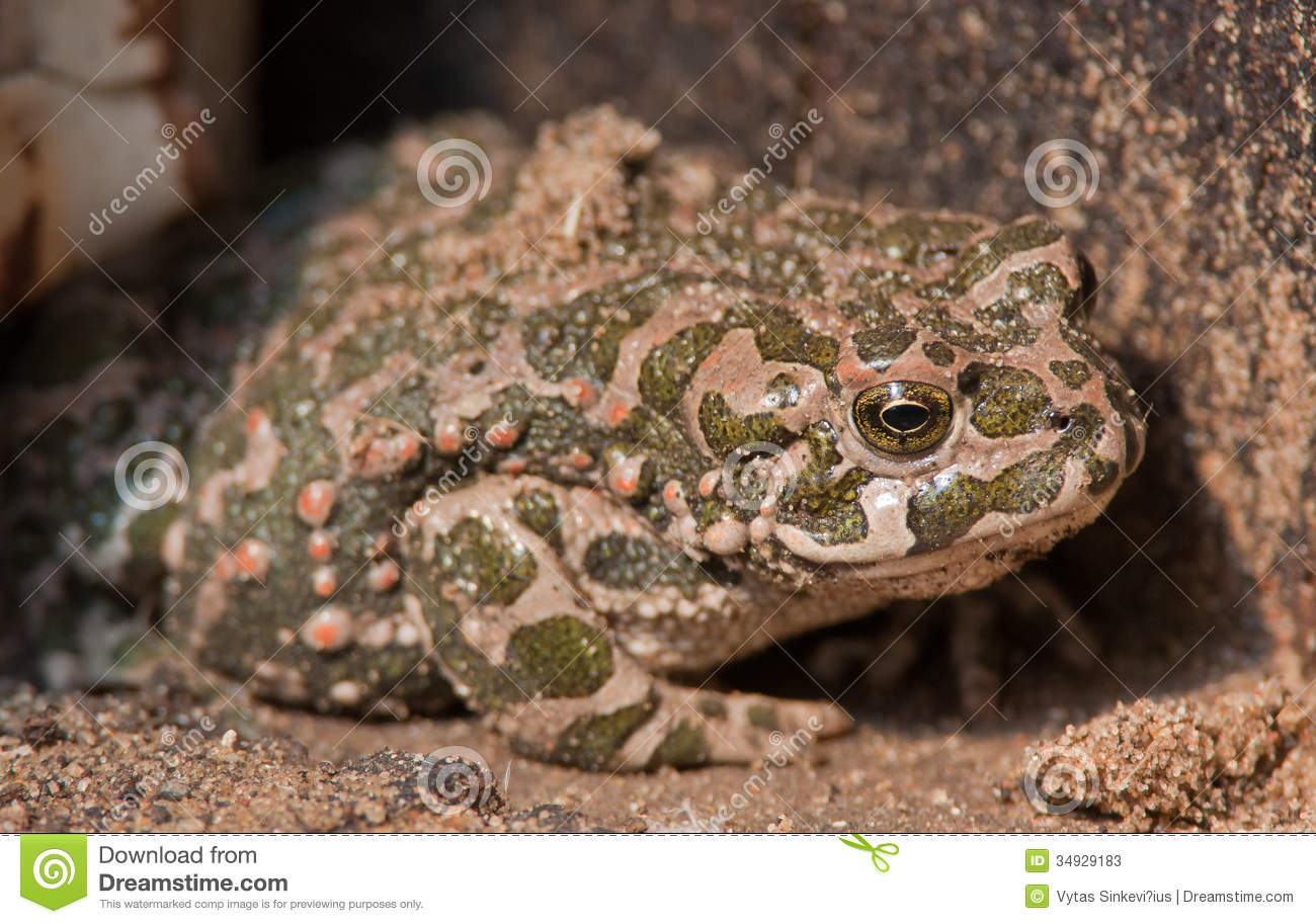 frog camouflage stock photos