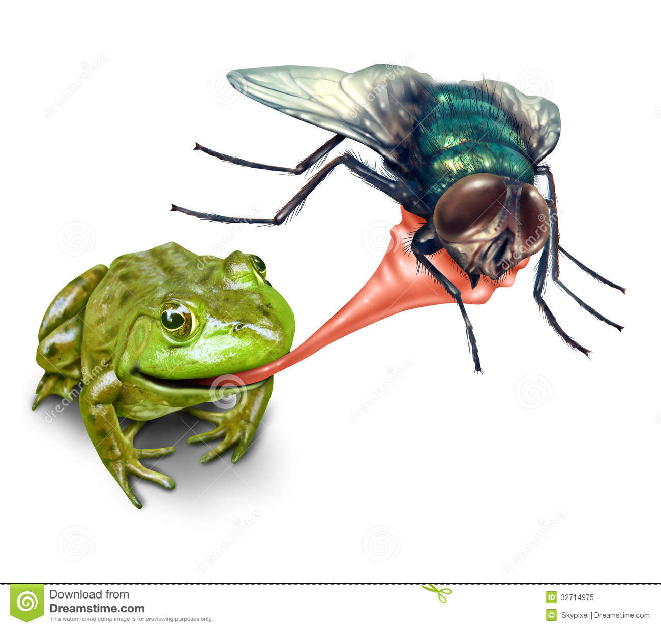 Frog Catching Bug Royalty Free Stock Photo - Image: 32714975