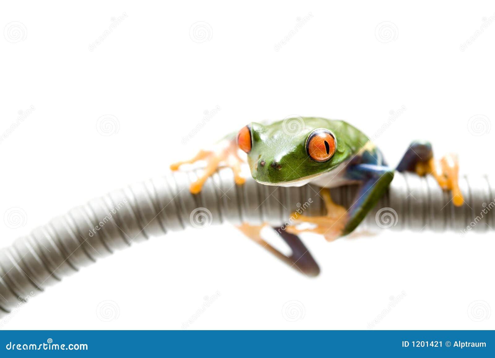 Frog climbing around