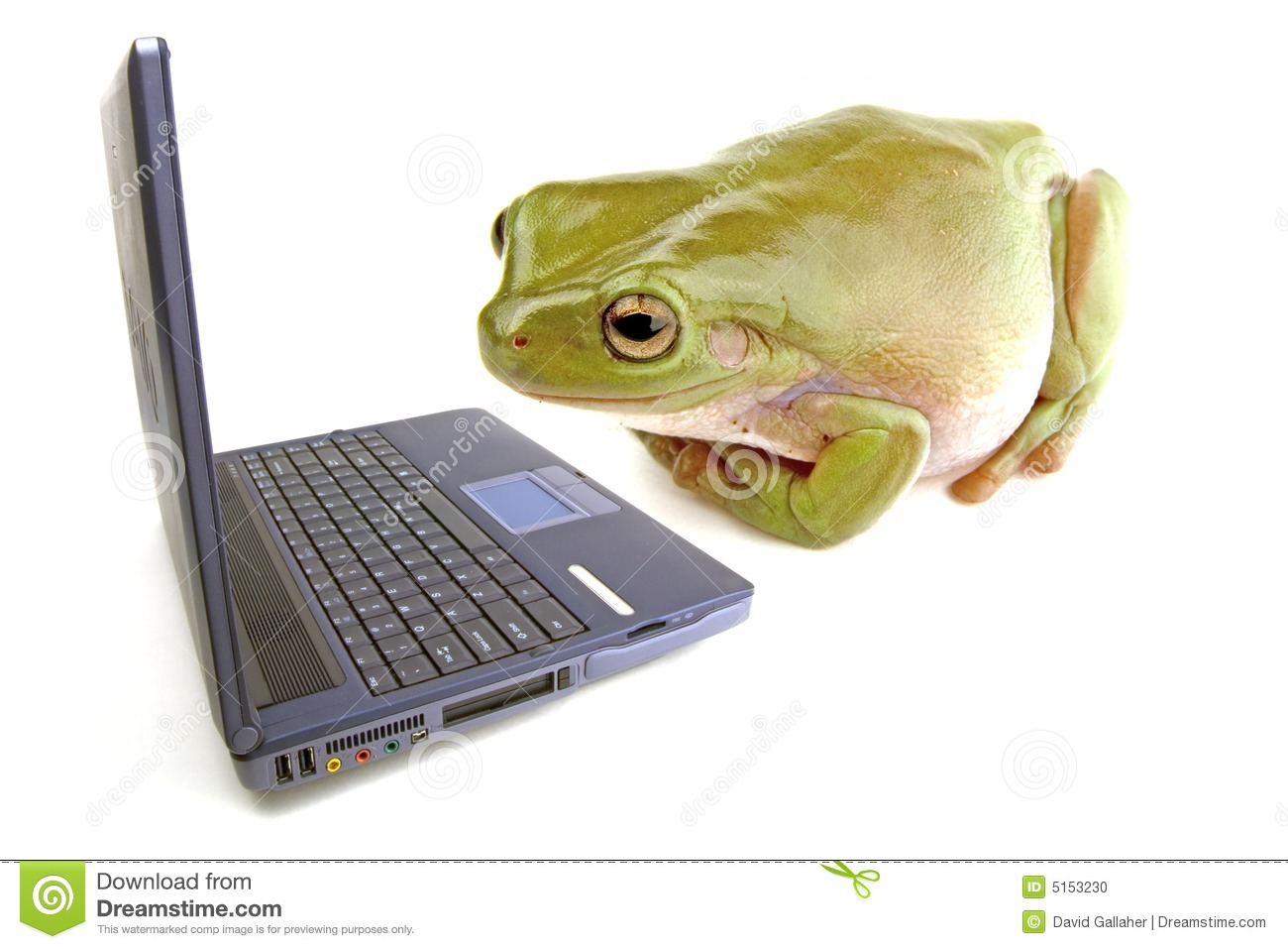 frog computer stock photo image of internet homework 5153230