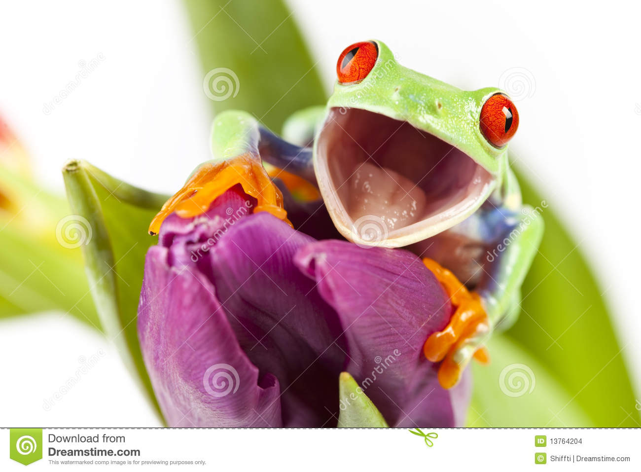 Frog On Flower Stock Images - Image: 13764204
