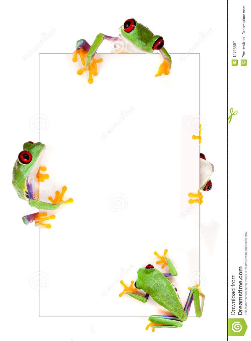 Young red eyed tree frog isolated on a white page as a border frame.