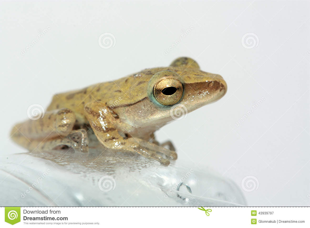 Amphibians animals pictures with names - photo#24