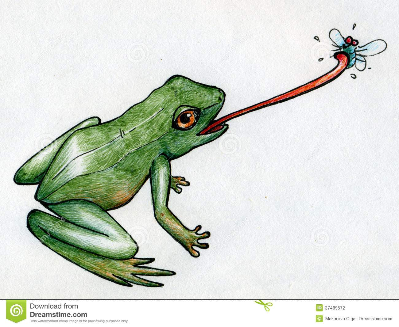 Frog hunting flies stock illustration. Illustration of ...