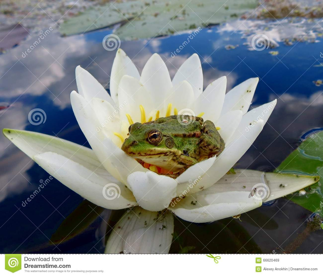 Frog princess sitting in a pond waiting for her prince stock image royalty free stock photo izmirmasajfo Image collections