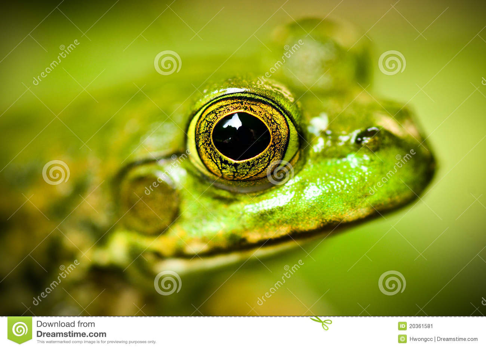 Frog s Head