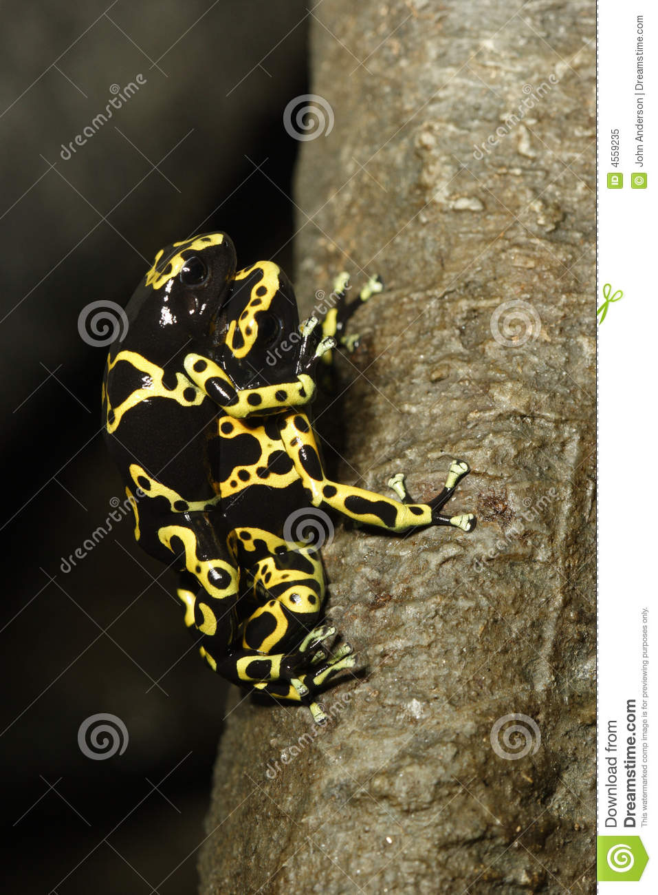 Royalty Free Stock Photo: Frog sex: http://www.dreamstime.com/royalty-free-stock-photo-frog-sex-image4559235