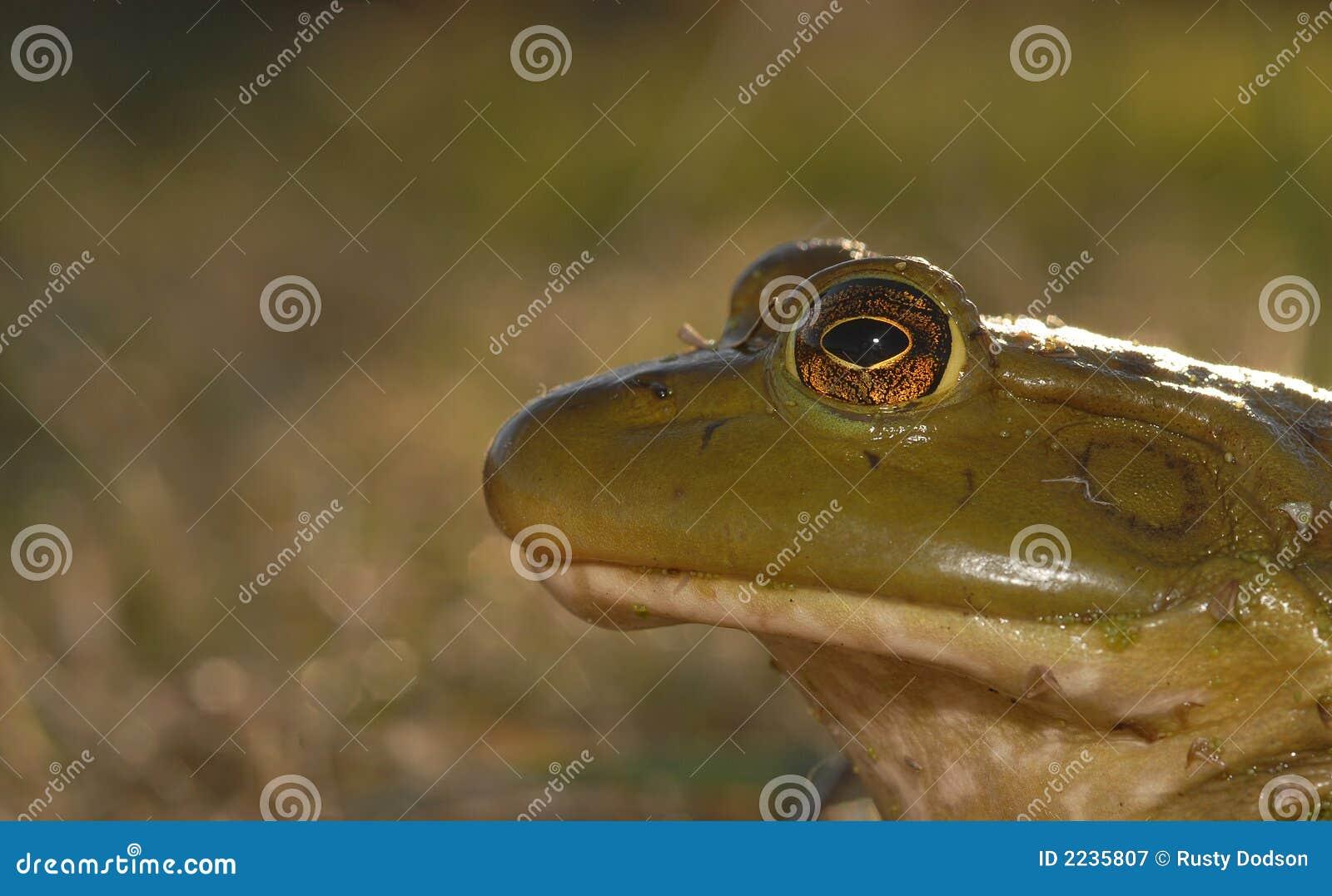 Frog Shot